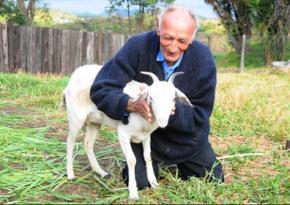 Бразилец решил жениться на козе, а церемонию бракосочетания проведет сатанист