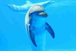 Ученые нашли новый вид дельфинов