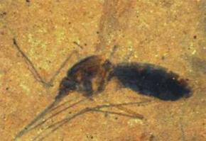 Ученые исследовали кровь, высосанную комаром 46 миллионов лет назад