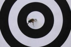 У бджіл виявили зачатки абстрактного мислення