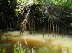 В лесах Суринама обнаружено 60 новых видов животных