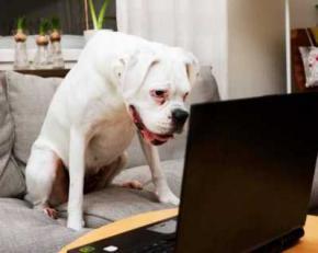 Вчені довели, що собаки впізнають знайомі обличчя на фотографіях