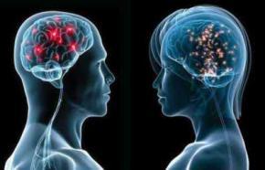 Вчені довели, що мозок чоловіків і жінок дійсно відрізняється