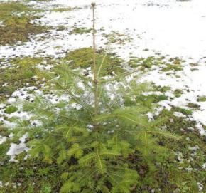 З 14 грудня в Україні знову похолодає