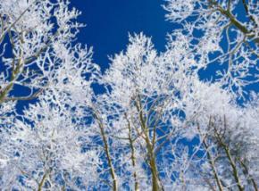 Синоптики розповіли, коли в Україну прийде справжня зима