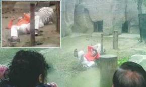 Китаец запрыгнул в вольер с тиграми, чтобы покормить их рисом