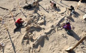 Учені розкрили таємницю гігантського кладовища китів у Чилі