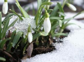 Весна в Україні буде дуже теплою