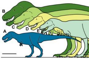 В Арктиці знайшли карликового тираннозавра (Nanuqsaurus hoglundi)