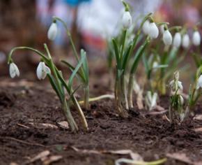 Погода в Украине на пятницу, 7 марта