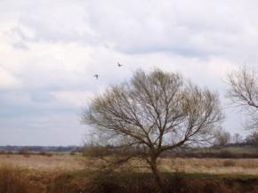 15-16 березня в Україну прийдуть похолодання та сильний вітер