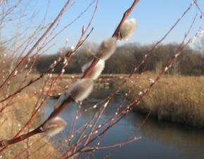 14 березня в Україні температура перевищить історичні показники