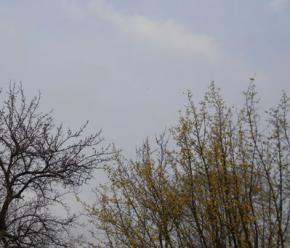 Сегодня в Украине будет облачно, а местами пройдут дожди