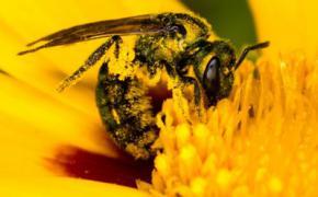 Биологи выяснили, как в цветках образуется нектар