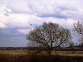 У вівторок в Україні буде тепло, дощі і грози