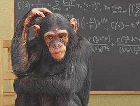 Обезьяны способны выполнять простые арифметические действия, оперируя цифрами и символами