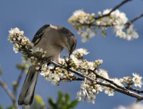 24 квітня в Україні очікується суттєве похолодання