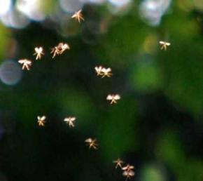 Доцент британского университета сфотографировал летающих фей