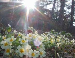 Вихідні в Україні будуть сонячними та прохолодними