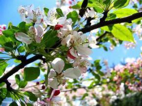 Погода в Україні на вихідні, 26 і 27 квітня