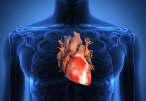 Вчені надрукують на 3D-принтері людське серце