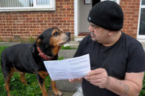 Собаку запросили голосувати на виборах до парламенту