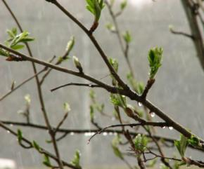 Сьогодні в Україні дощі, на сході та півночі можливий - мокрий сніг