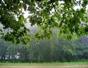 Сегодня в Украине немного похолодает и пойдет дождь