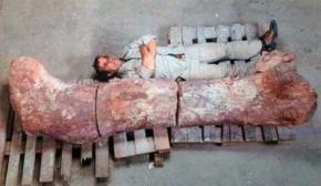 Ученые обнаружили кости самого крупного существа, когда-либо жившего на Земле