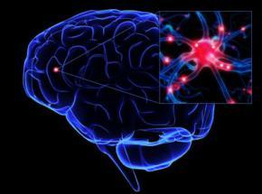 Нервові клітини здатні відновлюватися в будь-якому віці - вчені