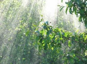 Вихідні в Україні будуть з дощами, грозами та шквалами