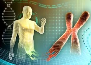 Вчені розкрили механізм загибелі клітин людини