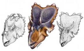 Вчені виявили новий вид рогатого динозавра з химерним набором крил на голові
