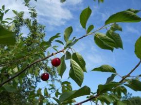 Сьогодні в Україні буде тепло, дощі перейдуть на Південь і Схід