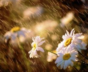 Сегодня в Украине дожди