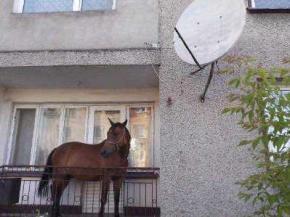 Чоловік затягнув коня на балкон, щоб його не вкрали