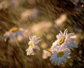 На більшій частині України сьогодні пройдуть дощі. Температура від +19 до +26