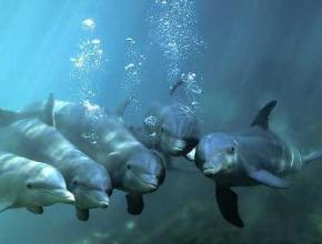 Біолог стала свідком того, як дельфіни врятували самогубця