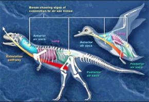 Вчені вважають, що динозаври не були ні холоднокровними, ні теплокровними