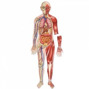 Вчені визначили найболючіші частини тіла людини