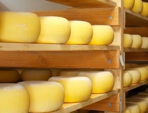 Россельхознадзор нашел в украинских сырах антибиотики