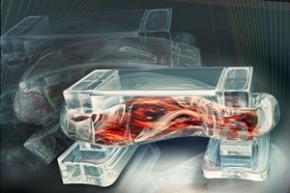 Вчені створили керовані біороботи з м'язових клітин