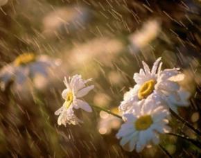 Сегодня, 10 июля в Украине будет пасмурно и дождливо