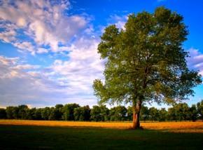Сьогодні в Україні пройдуть грозові літні дощі
