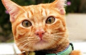 Хакер за допомогою улюбленої кішки зламав Wi-Fi сусідів