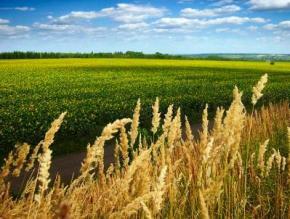 В Україні очікується суттєве зниження температури