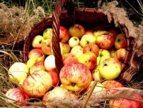 Сегодня, 19 августа в Украине празднуют Яблочный спас (Второй Спас), или Преображение Господне