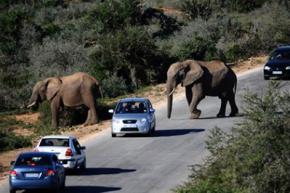 За останні 40 років диких тварин на Землі стало вдвічі менше
