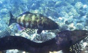 Размер мозга - не главное: рыбы оказались не глупее шимпанзе