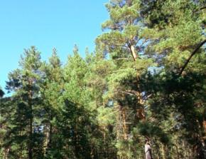 Погода на выходные 13-е и 14-е сентября порадует украинцев теплом